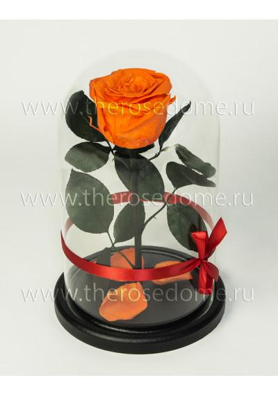 Роза в колбе, колба Premium, бутон 8 см, оранжевая