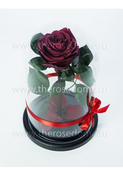 Роза в колбе, колба Premium, бутон 8 см, бордовая