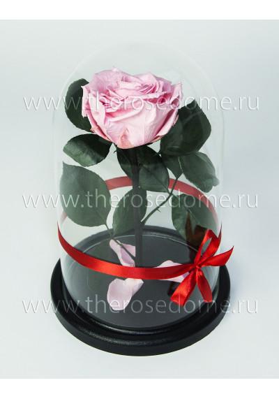 Роза в колбе, колба Premium, бутон 8 см, нежно-розовая
