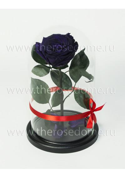 Роза в колбе, колба Premium, бутон 8 см, темно-фиолетовая