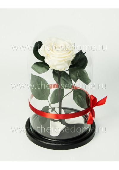 Роза в колбе, колба Premium, бутон 8 см, белая